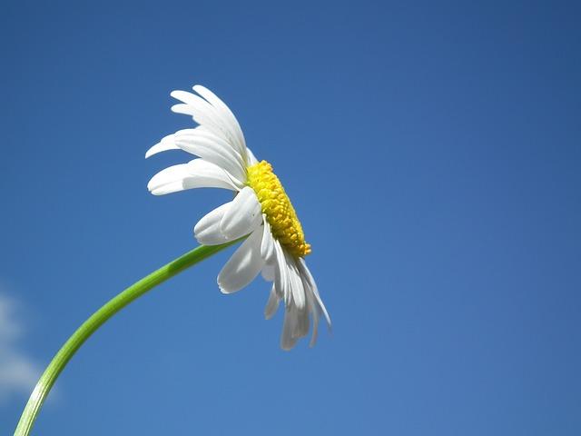 flower-204857_640