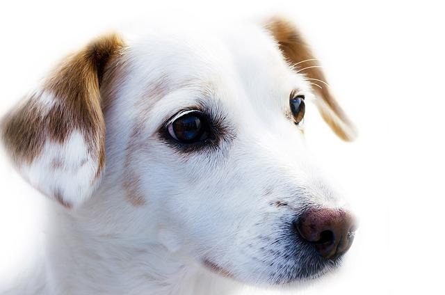 dog-72333_640